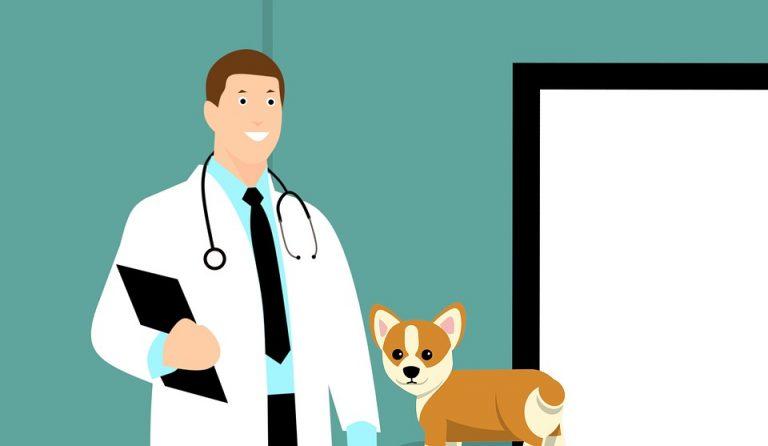 veterinario foroveterinario