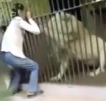 león ataca en una persona en pakistán