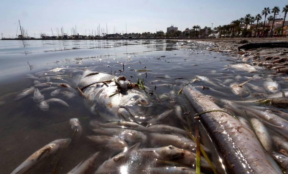 El mar menor muerto. El negocio del cambio climático