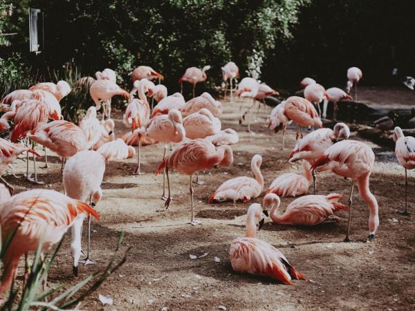 Foro de animales de zoológico