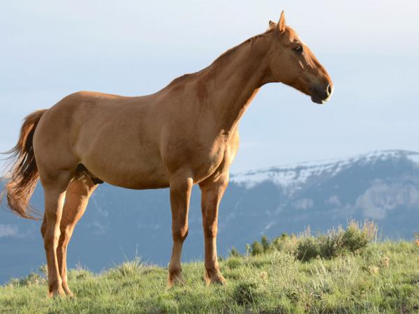 ForoVeterinario de caballos