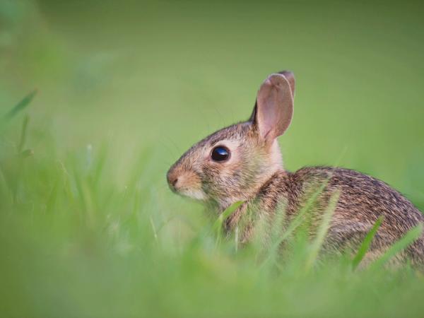 Foro de conejos