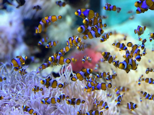Foro de acuariofilia peces