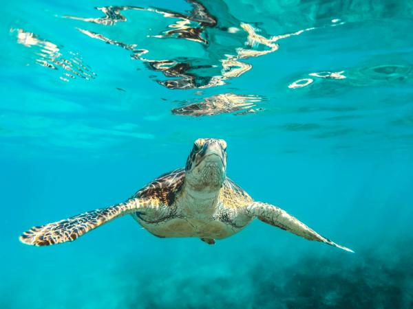 Foro de tortugas